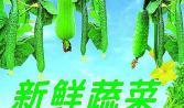 """汕头蔬菜配送:敢为天下""""鲜"""""""